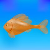 Sea Fish Royalty Free Stock Photo