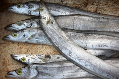 The sea-fish. Fish is rich in protein, egg, vitamins and essential amino acids and trace elements, is a typical high protein, low fat, high calcium natural Stock Photography
