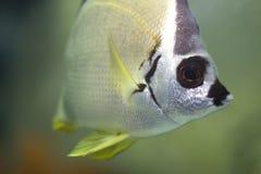 Sea fish's face Royalty Free Stock Image