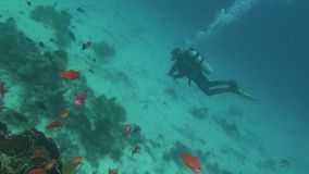 Sea Fish. Sea View. Underwater Video. Water. Diving underwater. Swim with shoal of tropical fish in Red Sea stock footage