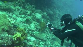 Sea Fish. Sea View. Underwater Video. Water. Diving underwater. Swim with shoal of tropical fish in Red Sea stock video