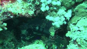 Sea Fish. Sea View. Underwater Video. Water. Diving underwater. Swim with shoal of tropical fish in Red Sea stock video footage