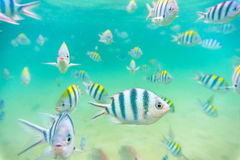 Sea fish at Seabed Stock Images
