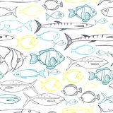 Sea fish. Vector seamless pattern. Sea fish on white background . Vector seamless pattern Stock Image