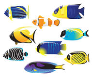 Sea fishes. Set of 9 colorful sea fishes stock illustration