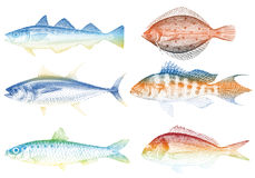 Sea fishes,. Set of sea fishes,  illustration Royalty Free Stock Photos