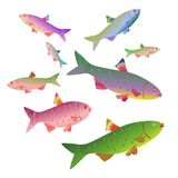 Sea fishes collection. EPS10 File simple Gradients. Vector set Stock Photos