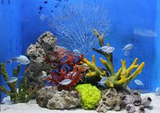 Sea fishes and coral Stock Photo