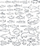 Sea fishes and creatures. Vector illustration of sea fishes and creatures collection Stock Photography