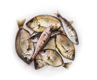 Sea fishes Royalty Free Stock Photo