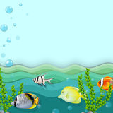 A sea with fishes Stock Photo