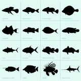 Sea fishes Royalty Free Stock Photos