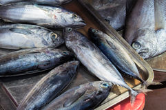 Sea fishes pile on seafood market. Fresh sea fish for sell. Small mackerel bunch top view photo. Stock Images