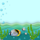 A sea with fishes and seaweeds. Illustration of a sea with fishes and seaweeds Stock Photos