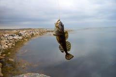 Sea fishing the Arctic circle Royalty Free Stock Photos