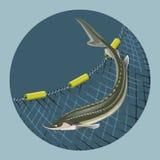 Sea fishing sign design vector illustration