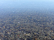 The sea floor at Drayton Harbor. Clear water gives a perfect view of the bottom of Drayton Harbor Royalty Free Stock Photo