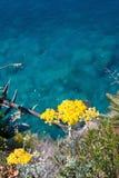 Sea flower Stock Photos