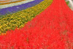 A sea of flowers. Autumn is spent oceans, all kinds of flowers and trees flourish, an open race Stock Image