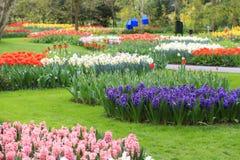 Sea of flowers Stock Image