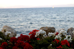 Sea flowers. Beautiful sea view in Greece Royalty Free Stock Photo
