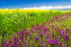 Sea of flowers Stock Photography