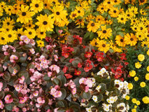 Sea of flowers Royalty Free Stock Photography