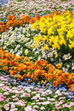 Sea of Flowers Stock Images