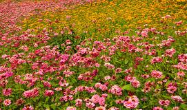 A sea of flowers. Park、gardening、flowers、color、bright Royalty Free Stock Photo