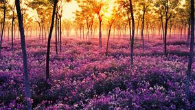 Sea of flowers. Purple and white flowers in the forest stock photos
