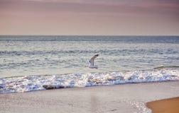 The sea stock photography