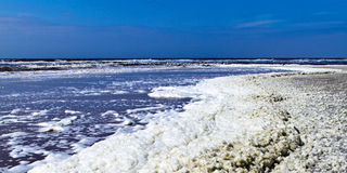 Sea foam on beach Stock Photography