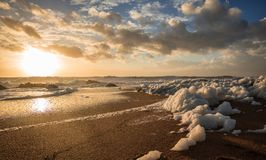 Sea foam on the beach at sunset Royalty Free Stock Image