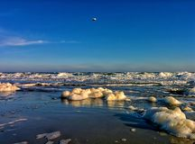 Sea foam and gull Royalty Free Stock Images