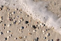 Sea foam and shells Royalty Free Stock Image