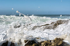 Sea foam and splashes Royalty Free Stock Images