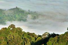 Sea of fog. Sea fog in the tropical forest, Khao Nan National Park. Nakhon Si Thammarat Province, southern Thailand Stock Photo