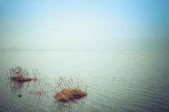 Sea Fog Stock Photos