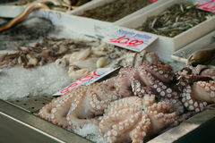 Sea food. Italian market stand with sea food Stock Image