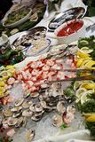 Sea Food Stock Images