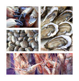 Sea food. Collage about sea food, oysters, crabs, shells and shrimp Royalty Free Stock Photography