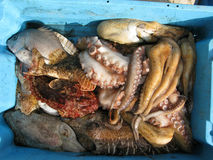 Sea food. Box of fresh sea food stock images