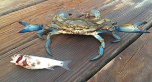 Sea Food Royalty Free Stock Image