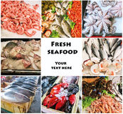 Sea food collage with raw fish and restaurant dishes Royalty Free Stock Photo