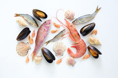 Sea food composition Stock Photography
