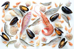 Sea food composition. Flat lay of fishes, shrimps, shells and mussels, view from above Stock Images