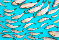 Sea food concept Royalty Free Stock Photography
