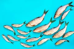 Sea food concept Royalty Free Stock Photo