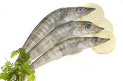 Sea food;fish Royalty Free Stock Photos