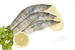 Sea food;fish Royalty Free Stock Photo